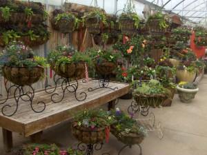 Our Nursery, Plantings, Patios, design, Scovills landscape, landscape design, landscaping, landscapes, landscape patio design