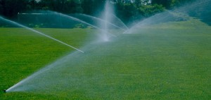 Irrigation, Nursery, Plantings, Patios, design, Scovills landscape, landscape design, landscaping, landscapes, landscape patio design