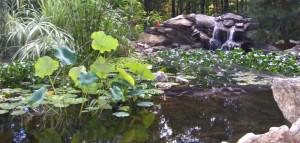 Water features, Nursery, Plantings, Patios, design, Scovills landscape, landscape design, landscaping, landscapes, landscape patio design
